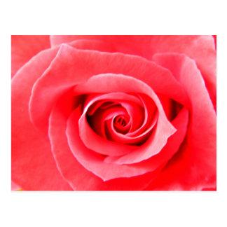 赤いバラのマクロ写真 ポストカード