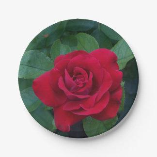 赤いバラの写真 ペーパープレート