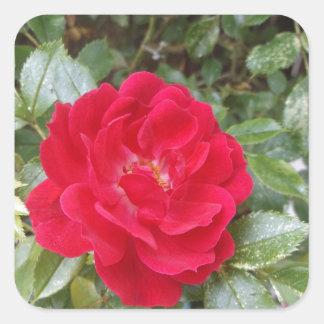 赤いバラ スクエアシール