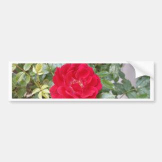 赤いバラ バンパーステッカー