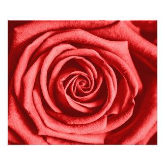 赤いバラ フォトプリント