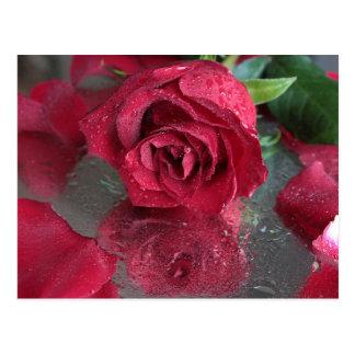 赤いバラ ポストカード