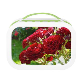 赤いバラ ランチボックス