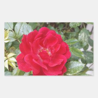 赤いバラ 長方形シール