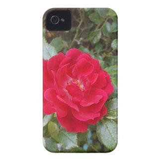 赤いバラ Case-Mate iPhone 4 ケース