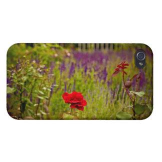赤いバラ iPhone 4/4Sケース