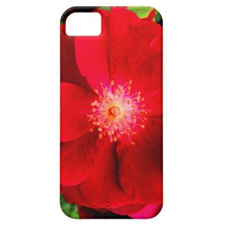 赤いバラ iPhone SE/5/5s ケース