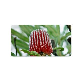 赤いバンクシアの花 ラベル