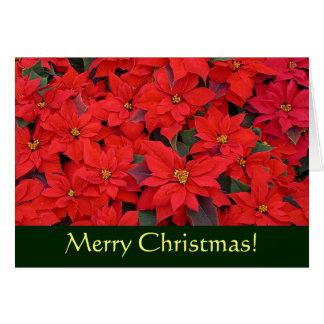 赤いポインセチアのクリスマスカード(中ブランク) カード