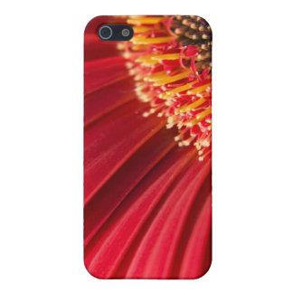 赤いマクロガーベラのデイジーの花 iPhone SE/5/5sケース