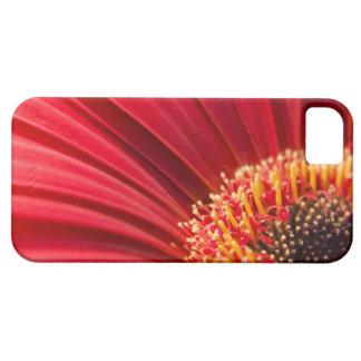 赤いマクロガーベラのデイジーの花 iPhone SE/5/5s ケース