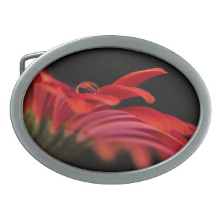赤いマクロガーベラの花 卵形バックル