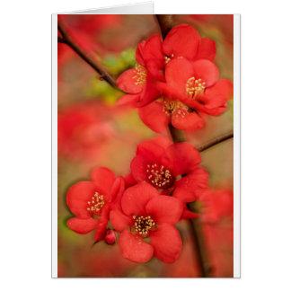 赤いマルメロの花 カード