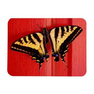 赤い優れた磁石のアゲハチョウの蝶 マグネット