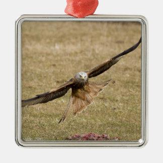 赤い凧(Milvus Milvus) メタルオーナメント