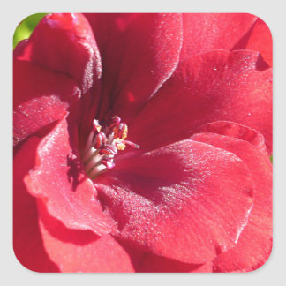 赤い情熱 スクエアシール