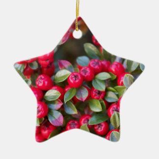赤い果実の写真のクリスマスの赤の果実 セラミックオーナメント