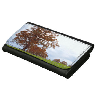 赤い秋の木は田園写真撮影を去ります