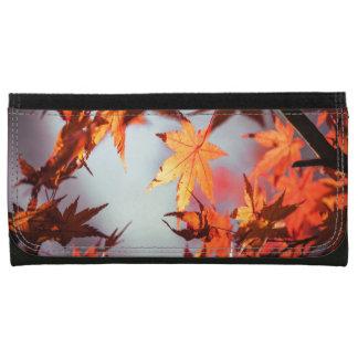 赤い秋の紅葉のカエデの木