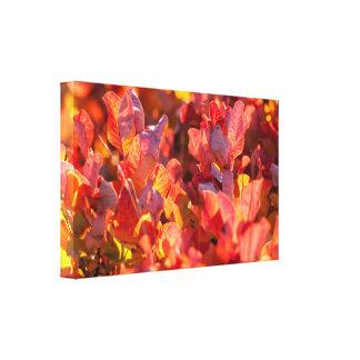 赤い秋の自然 キャンバスプリント