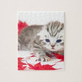 赤い紅葉間の若い猫 ジグソーパズル