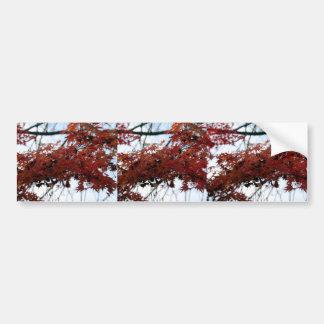 赤い紅葉 バンパーステッカー