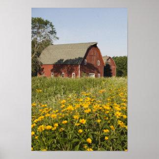 赤い納屋および黄色い野生の花 ポスター