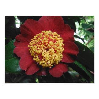 赤い緑の黄色い花の木 フォトプリント