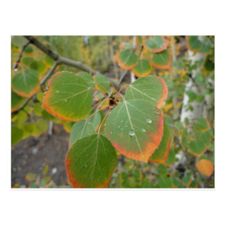 赤い緑の《植物》アスペンの葉 ポストカード