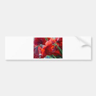 赤い花のアマリリス バンパーステッカー