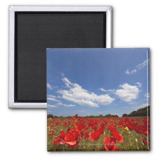 赤い花の十分の分野 マグネット