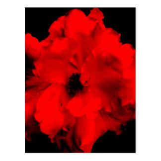 赤い花愛contrast.jpg ポストカード