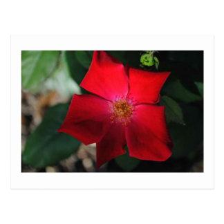 赤い花/florのrojo ポストカード