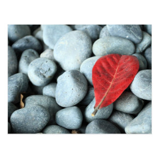 赤い葉および石 ポストカード