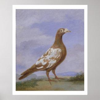 赤い雑色の伝書鳩(キャンバスの油) ポスター