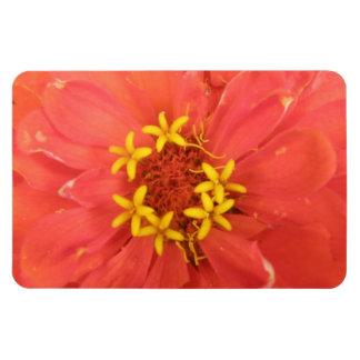 赤い《植物》百日草のマクロ優れた磁石 マグネット