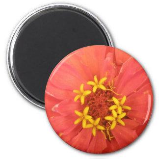赤い《植物》百日草のマクロ磁石 マグネット