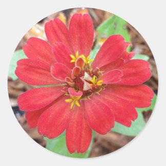 赤い《植物》百日草の円形のステッカー、封筒のシーラーでかわいらしい ラウンドシール