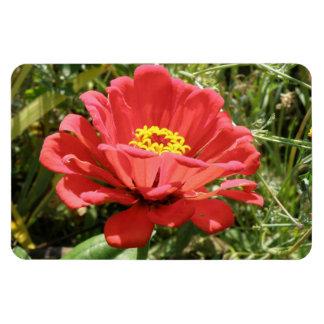 赤い《植物》百日草の報酬の磁石 マグネット