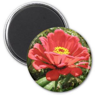 赤い《植物》百日草の磁石 マグネット