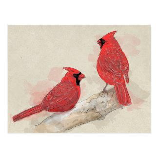 赤い(鳥)ショウジョウコウカンチョウ ポストカード