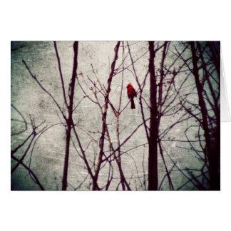 赤い(鳥)ショウジョウコウカンチョウ-冬場面 カード