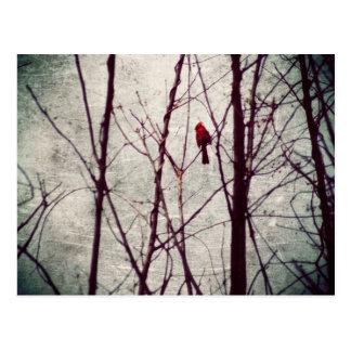 赤い(鳥)ショウジョウコウカンチョウ-冬場面 ポストカード