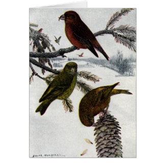 赤いCrossbillsおよびPinecone カード
