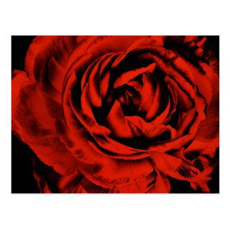 赤いRanunculusの花のクローズアップのカラフルの花柄 ポストカード