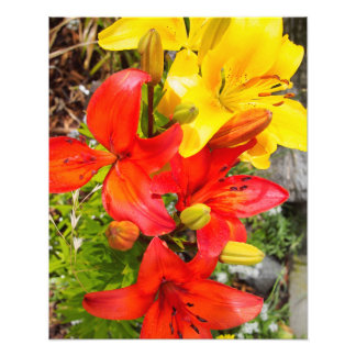 赤くおよび黄色の花 フォトプリント