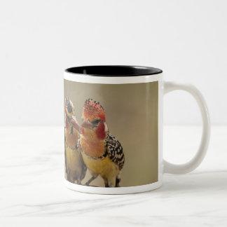 赤くおよび黄色のBarbetの食べ物のシロアリ ツートーンマグカップ