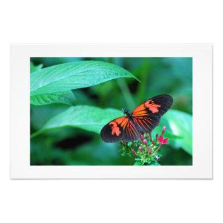 赤くおよび黒い蝶 フォトプリント