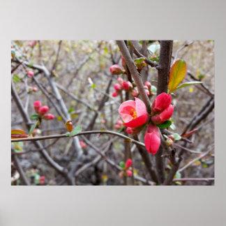 赤く小さい花 ポスター