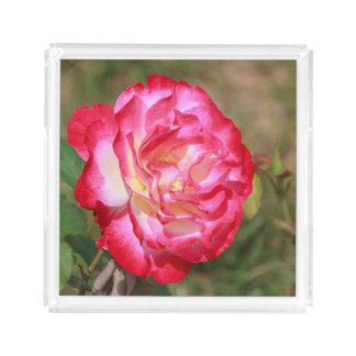 赤く、ピンク白いバラ アクリルトレー